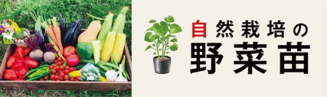 ●野菜苗バナー