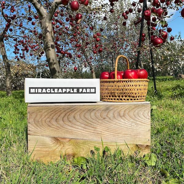 リンゴ宣材写真
