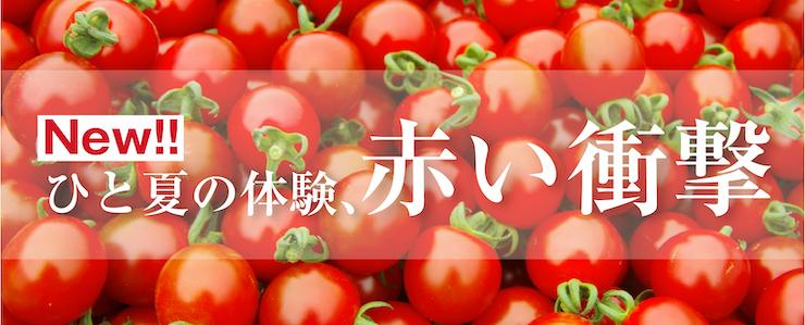 トップミニトマトバナー