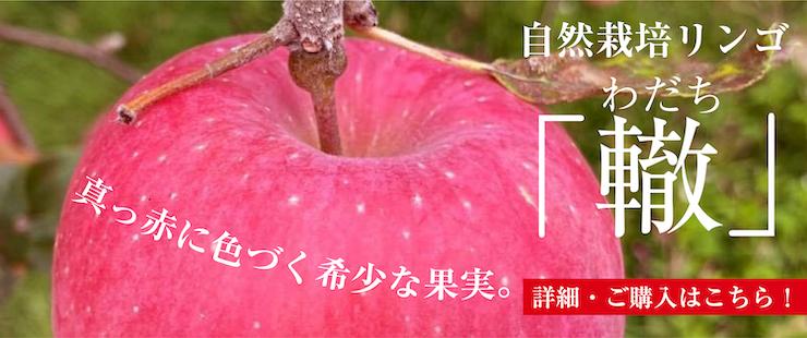 轍 リンゴ バナー